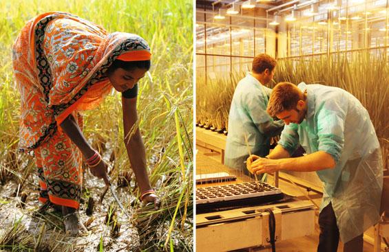10-Milliarden-Reisbauer-brehl-backt