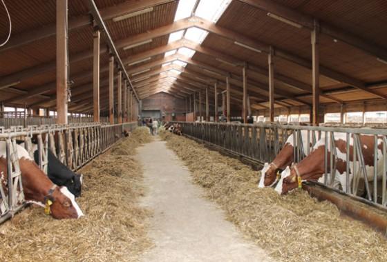 Der Kuhstall war für die Besucher geöffnet. Bild: Jens Brehl – CC BY-NC-SA 4.0